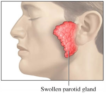 sweat glands in neck